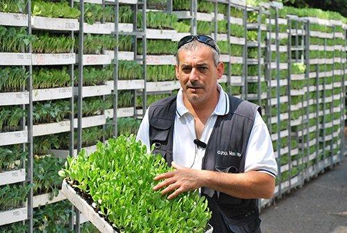 Nel Veneto si stanno piantando oltre 60 milioni di radicchi micorizzati con il Micosat F